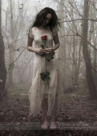 Фото Девушка в белом платье с розой в руках стоит в лесу, арт Jessica Allain