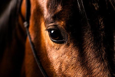 Фото Взгляд вороного коня