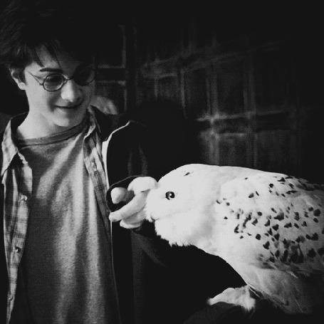 Фото Актер Daniel Radcliffe / Дэниэл Рэдклифф в роли Harry Potter / Гарри Поттера гладит сову по клюву