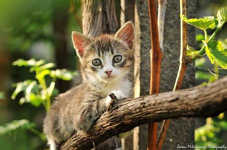 Фото Котенок отдыхает на дереве