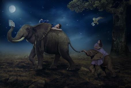 Фото Мальчик, лежащий на слоне, которому в хвост вцепился маленький слоненок с сидящей на нем девочкой с открытой книгой, над ними пролетает сова, держащая в лапах книгу на фоне ночного неба, высыпавших звезд и ярко светящей луны, фотография Nataliorion