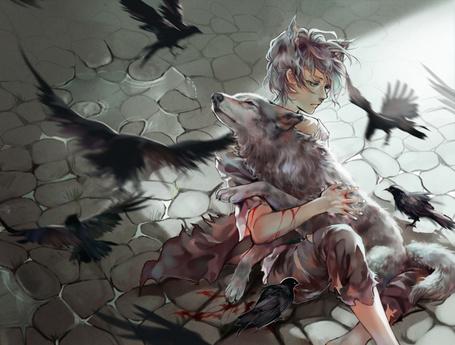 Фото Девушка обнимает раненого волка окруженная воронами, художница iya-chen