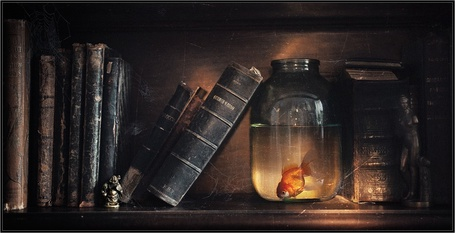 Фото На полке стоят книги и банка с водой, в которой плавает золотая рыбка