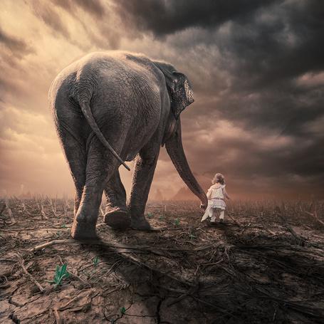 Фото Маленькая девочка в белом платье, держащая слона за хобот, шагает рядом с ним по потрескавшейся земле с пробивающимися через нее ярко - зелеными ростками зелени на фоне пасмурного неба, фотография Garas lonut