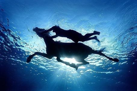 Фото Плывущие девушка с лошадью (© alcatel), добавлено: 07.10.2011 04:15
