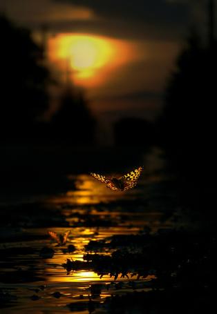 Фото Летящие бабочки на закате солнца под небольшим рудником (© BRODJaGA), добавлено: 02.02.2013 21:38