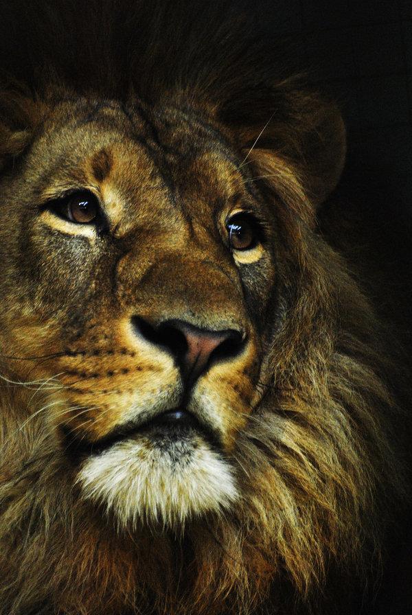 Смешные картинки львы на аватарку, перевод денег открытка