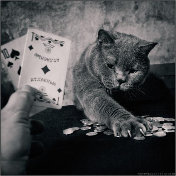 Картинка кот играет в карты казино голден старс
