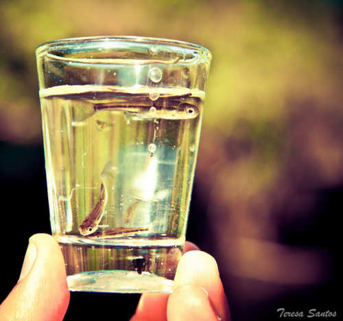 Фото женская рука держит стакан воды