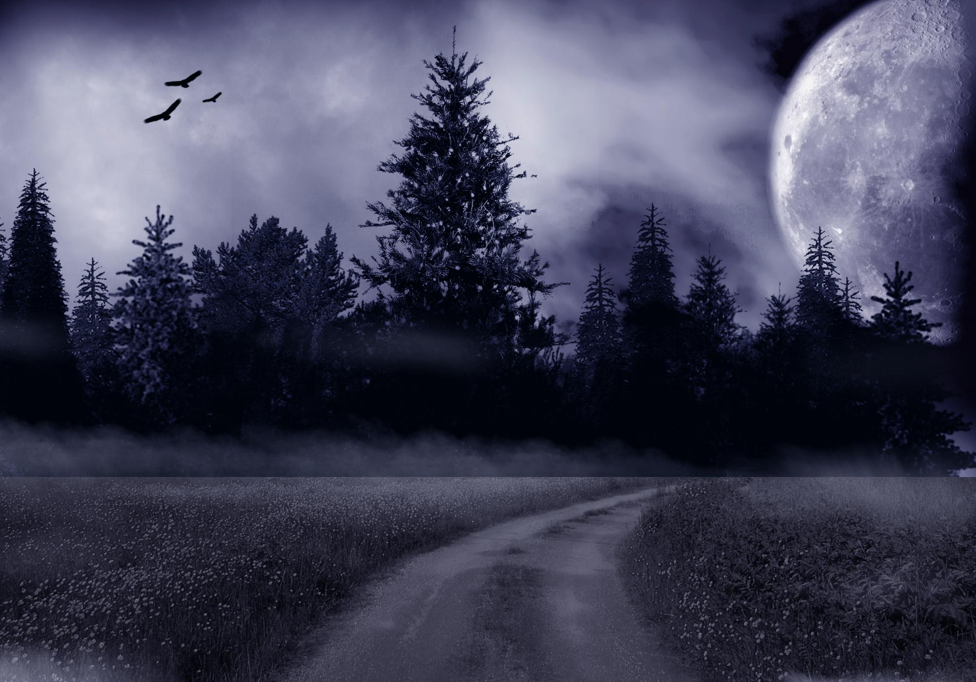 Картинки лунная ночь в лесу, красивые картинки картинки