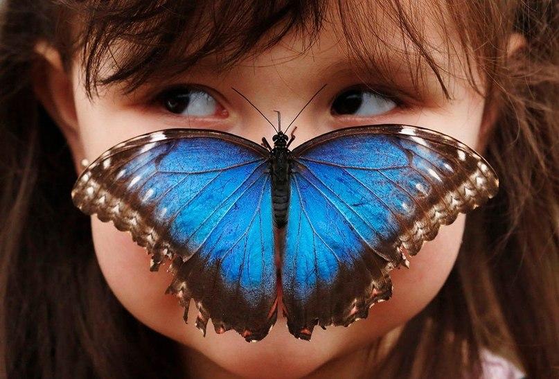 Фото Девочка с карими глазами, у которой на носике сидит большая, синяя бабочка с коричневым ободком