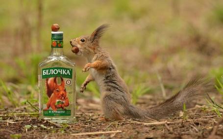 Фото Белочка, державшая во рту орех фундука, стоящая возле бутылки с водкой, на которой на крышке лежит орех фундука и этикетка с надписью БЕЛОЧКА, Я ПРИШЛА, фотография Александра Юкарева