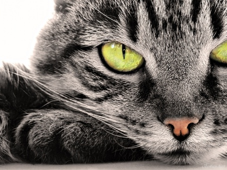 Рыжий кот 56
