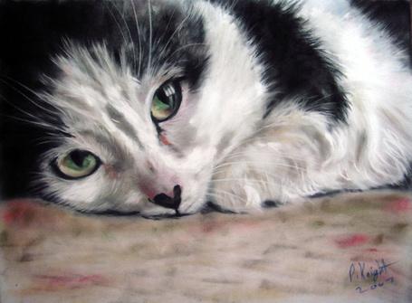 Фото Рисунок лежащего кота