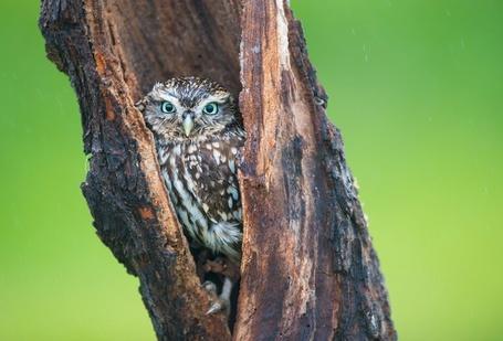 Фото Сова с большими желтыми глазами сидит на ветке дерева