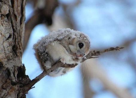 Фото Маленький бельчонок держится за ветку дерева