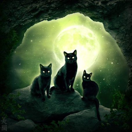 Фото Три черных кошки сидят на камнях в пещере на фоне звездного неба и полной луны (© chucha), добавлено: 13.06.2013 00:52