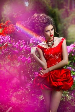 Фото Девушка в красном платье на фоне кустов розовых роз, фотограф Yaroslavna Nozdrina / Ярославна Ноздрина