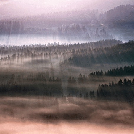 Фото Туман в лесу в лучах солнца