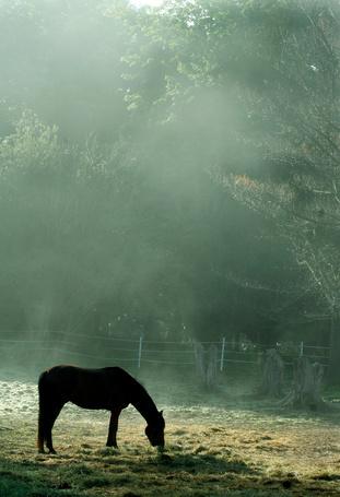 Фото Лошадь ест сено в тумане