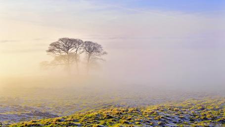 Фото Два дерева на равнине, окутанной туманом