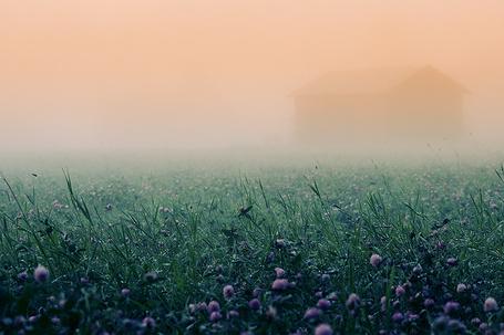 Фото Цветущая поляна с клевером и дом в тумане