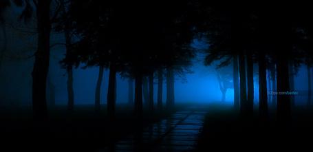Фото Вечерний туман в парке и тропа, проходящая через деревья, фотограф Олег Берлев