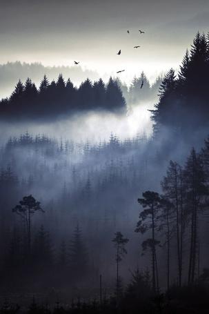 Фото Туман окутавший лес, над которым летает стая птиц
