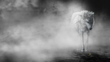 Фото Серый волк окутан туманом