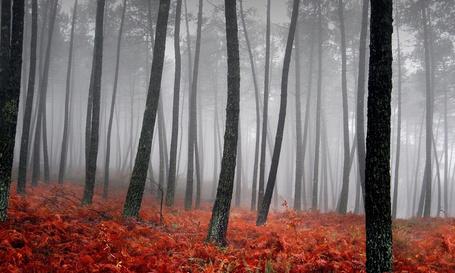 Фото Лес, на траве лежат красные опавшие листья, клубится туман