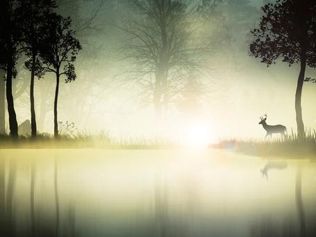 Фото На берегу водоема, в траве стоит олень, растут деревья, клубится туман