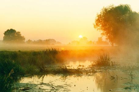 Фото Туманное утро над рекой