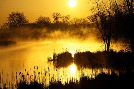 Фото Утки плавают в реке, по которой стелется туман