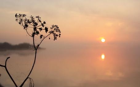 Фото Растение в паутине на фоне густого тумана над рекой