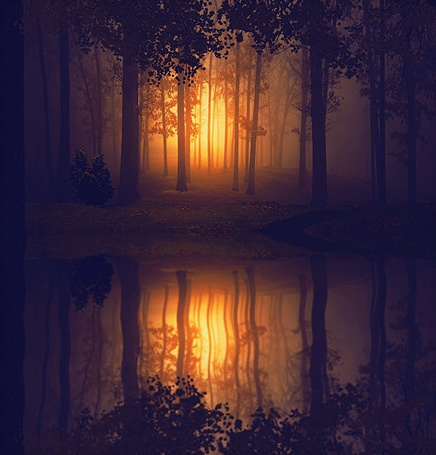 Фото Деревья в густом тумане отражаются в водоеме