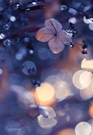 Фото Сухой цветок в солнечных бликах, фотограф lieveheersbeestje
