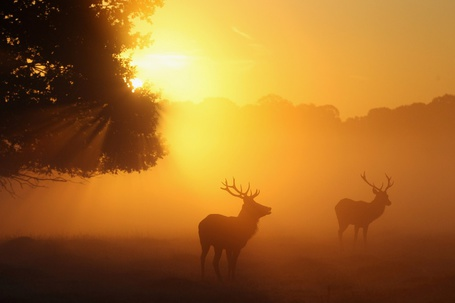 Фото Два оленя пасутся туманным утром в поле рядом с деревьями