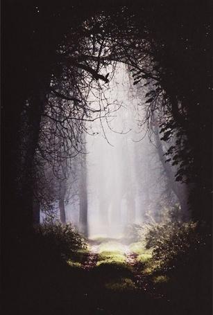 Фото Густой темный лес, вдалеке видна тропа, освещенная солнцем и окутываемая туманом