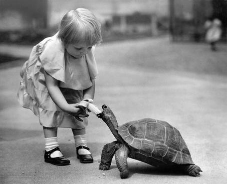 Фото Девочка кормит большую черепаху бананом