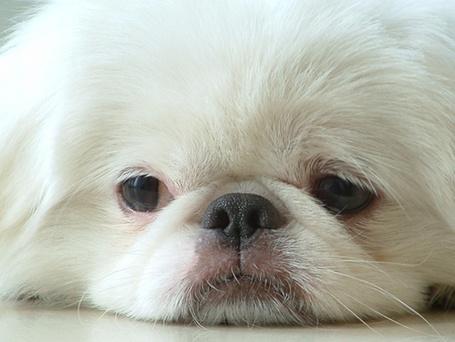 Фото Милая собака с грустными глазами