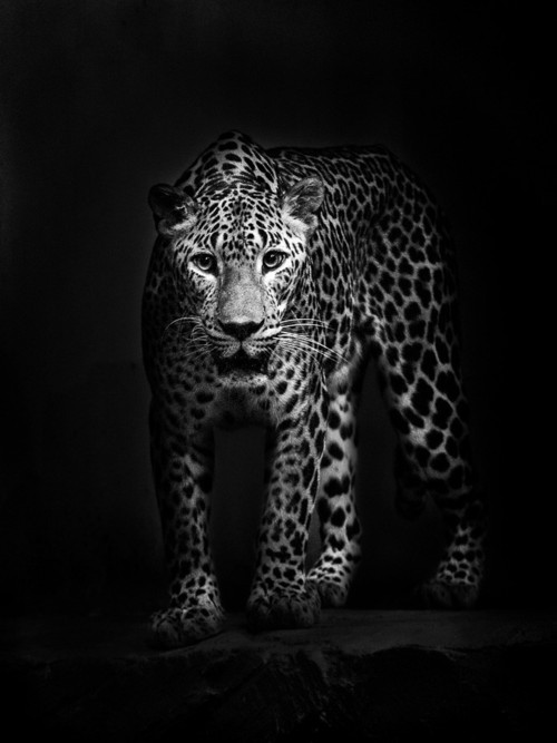 Картинки черно белая природа