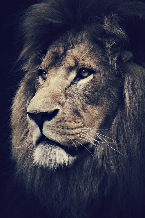 Снегирями картинки, картинка крутые лев