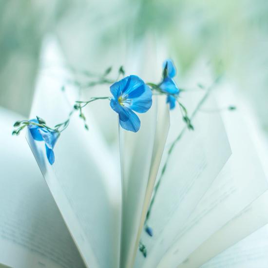 Цветок по марийски