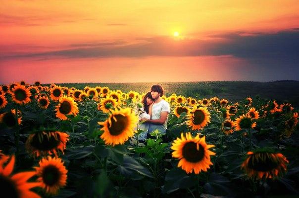 Фото Влюбленная пара в поле подсолнухов, фотограф Felicia Simion
