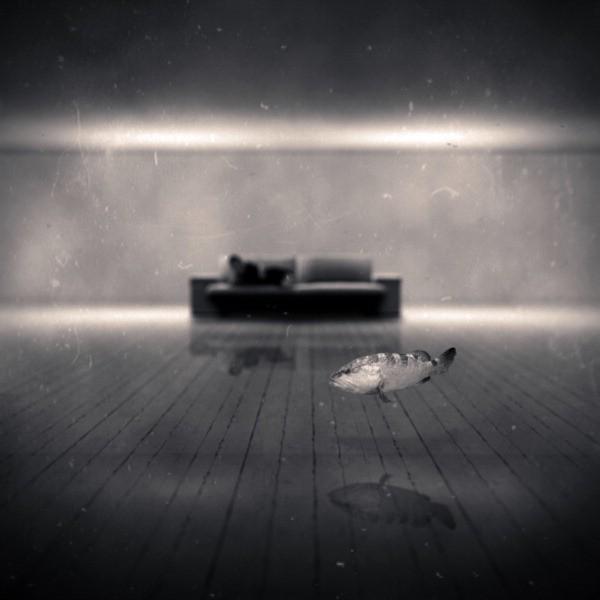 Фото Рыбка плавает в комнате на фоне дивана, фотограф ...: http://photo.99px.ru/photos/117070/
