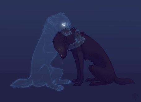 Фото волка и волчицы - 622