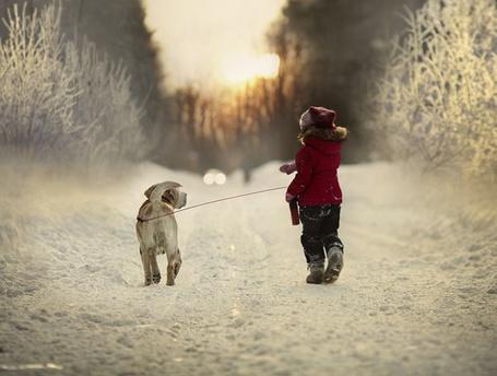 Фото Девочка по снежной дороге выгуливает собаку породы палевый лабрадор