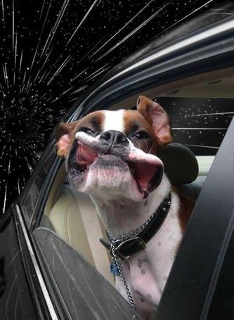 Фото Американский бульдог высунул голову из автомобиля во время движения, на фоне космоса (© zmeiy), добавлено: 03.07.2013 13:19