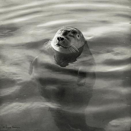 тюлень подумала акула картинка