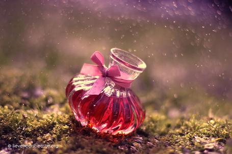 Фото Маленькая бутылка красных духов стоит на земле, фотограф Lieveheersbeestje